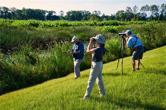 Three people watching birds in a wetland area with binaculars.