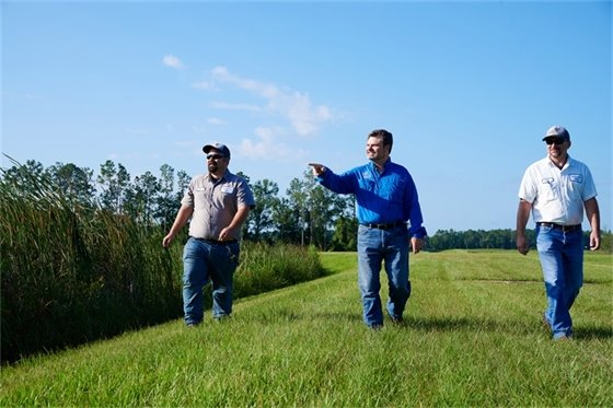 Three staff members walking along a wetland area with one staff member pointing.