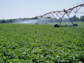 Irrigation Sprinkler in a Field