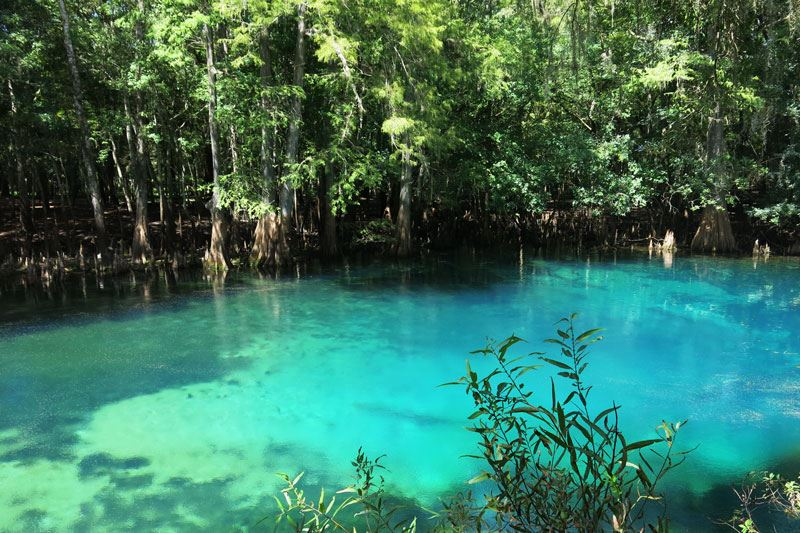 The bright blue water of Manatee Springs is accented by lush vegetation.