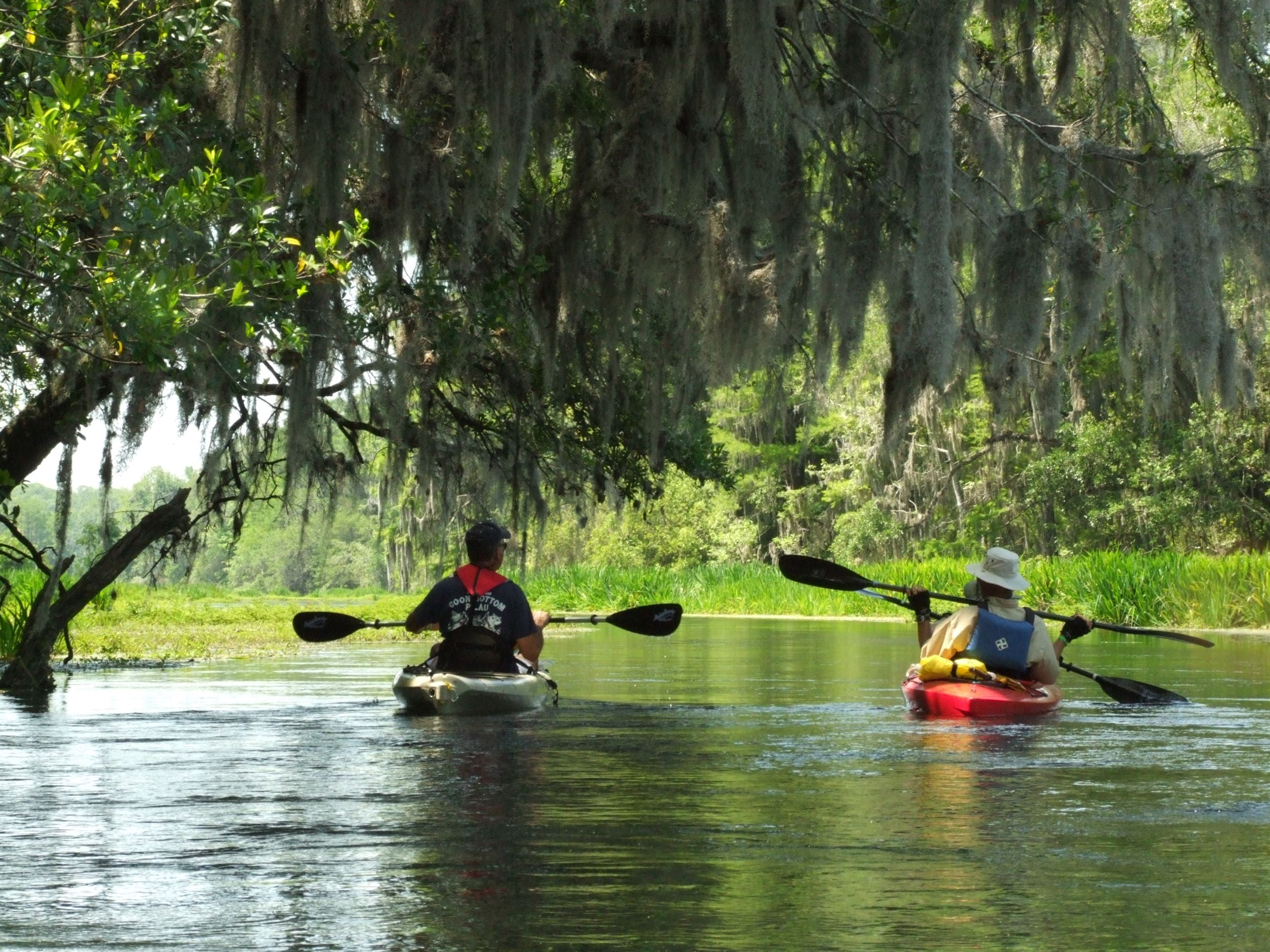 Kayakers paddling a river shaded by trees