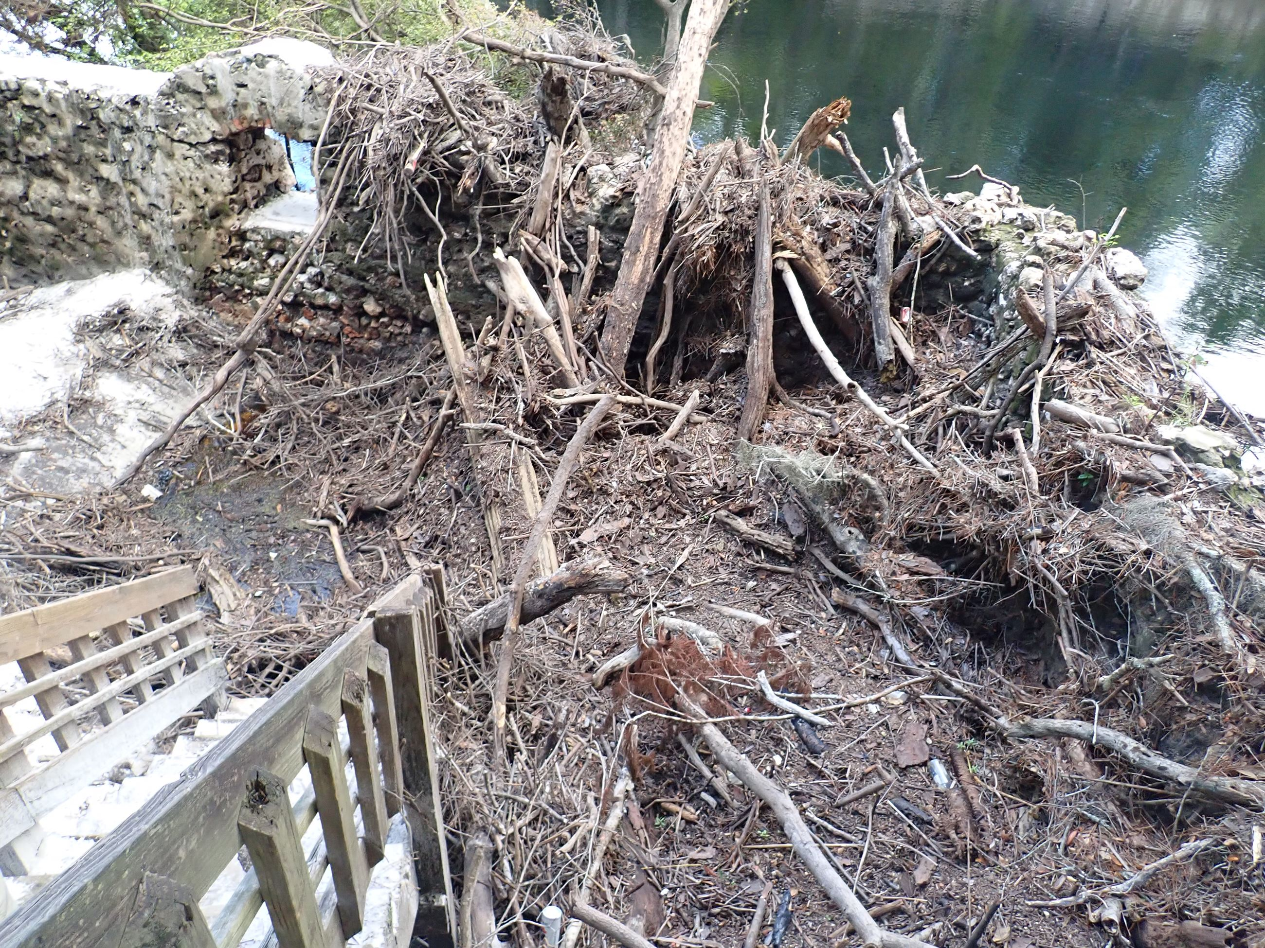 Debris and Sediment at Suwannee Springs