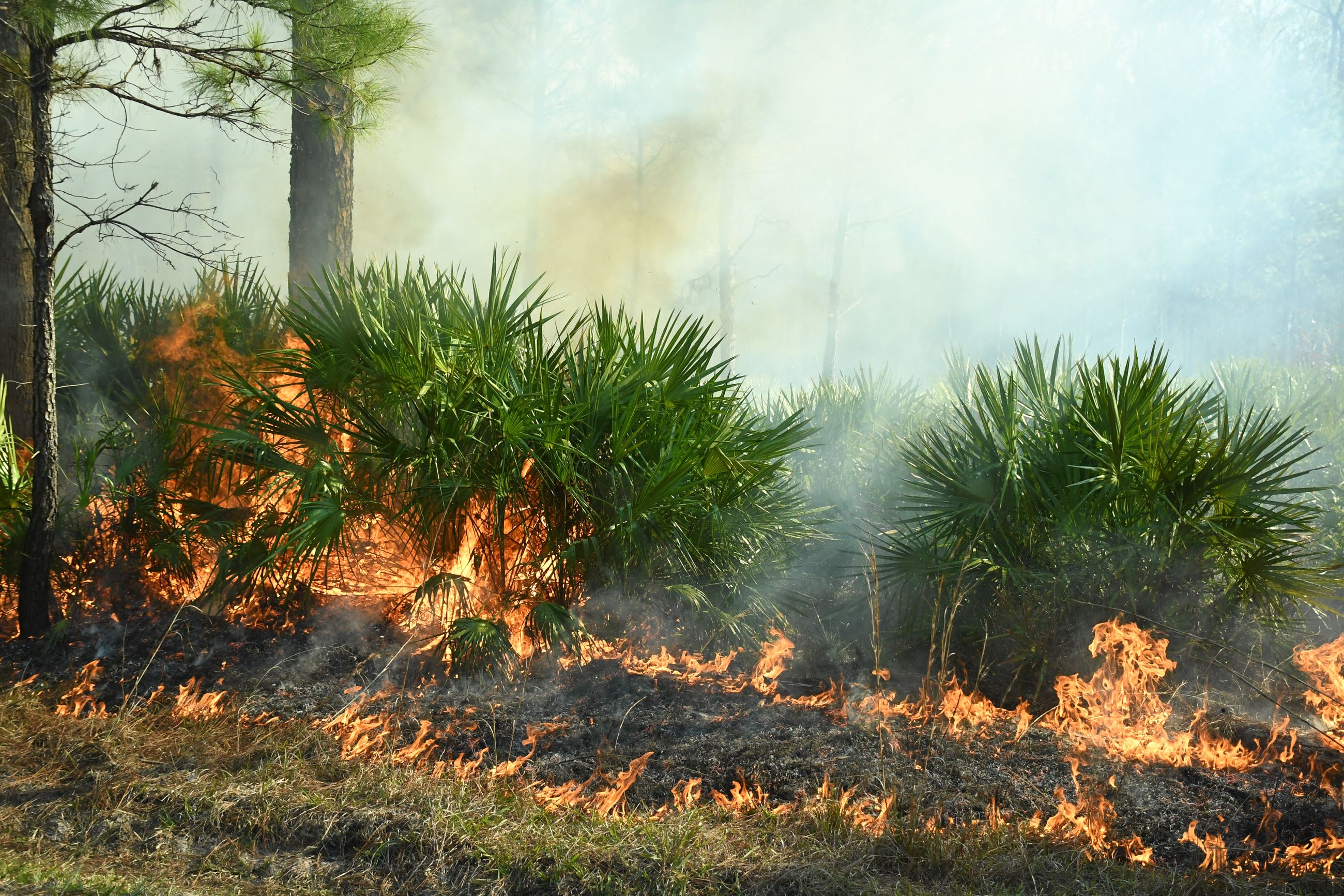 Fire moving towards vegetation
